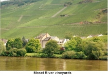 Mosel River Vineyards